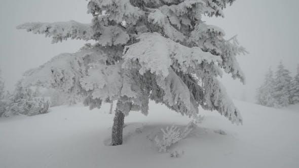 Cover Image for Fantastic Winter Landscape