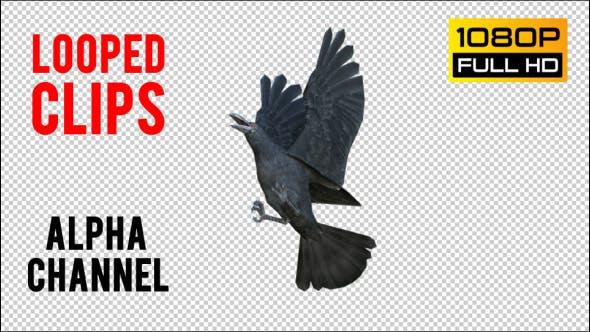 Thumbnail for Black Raven 1 Realistic Pack 3