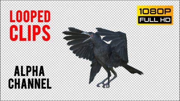Thumbnail for Black Raven 2 Realistische Pack 4