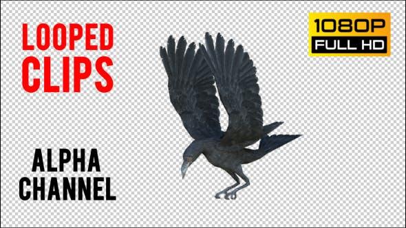 Thumbnail for Black Raven Realistic 8