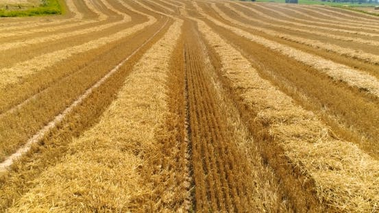 Thumbnail for Aerial View of Harvested Agricultural Field