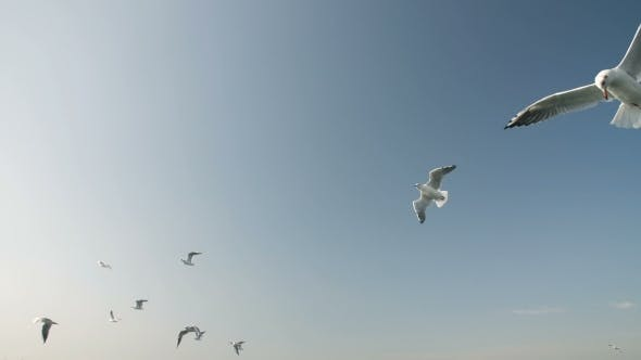 Thumbnail for Flock of Seagulls