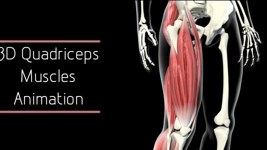 Thumbnail for 3D Quadriceps Muscles