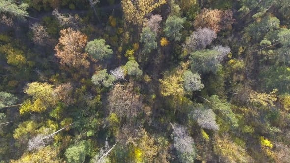 Thumbnail for Aerial View Fall Colors Tree Tops Flying Over Autumn Landscape