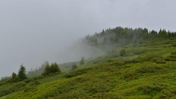 Thumbnail for Fantastic Summer Landscape