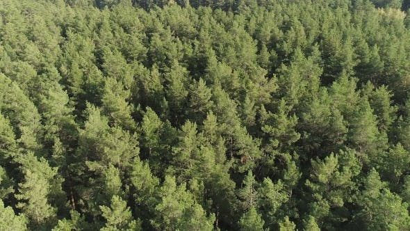Thumbnail for Background Beautiful Green Wild Forest Aerial View
