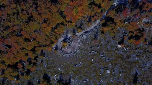 View of the Autumn Forest From a Height. Patagonia, Argentina