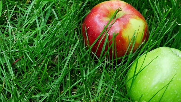 Thumbnail for Red And Green Ripe Juicy Apples Scattered on the Green Grass