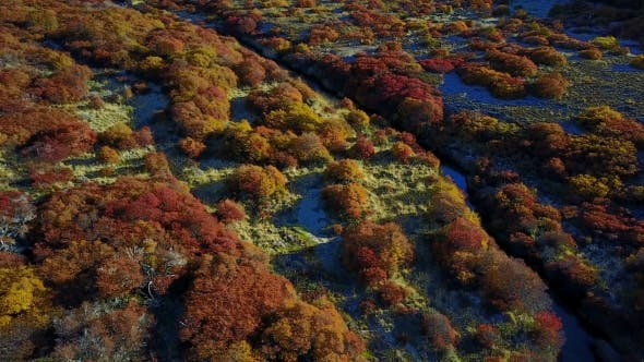 Thumbnail for View of the Autumn Forest From a Height. Patagonia, Argentina