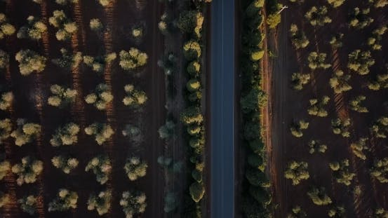 Thumbnail for Tree Lined Road