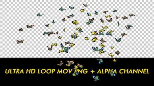 Butterflies - Colorful Swarm - Resizable Loop - 4K