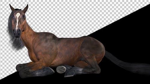 Kastanienpferd Loop