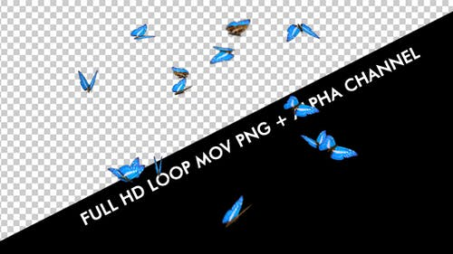 Butterflies - Blue Charaxes Swarm - Resizable Loop