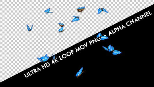 Butterflies - Blue Swarm - Resizable Loop - 4K