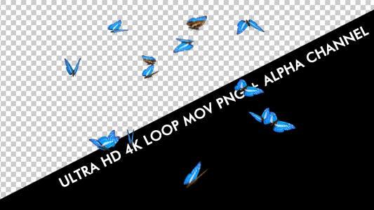 Thumbnail for Butterflies - Blue Swarm - Resizable Loop - 4K