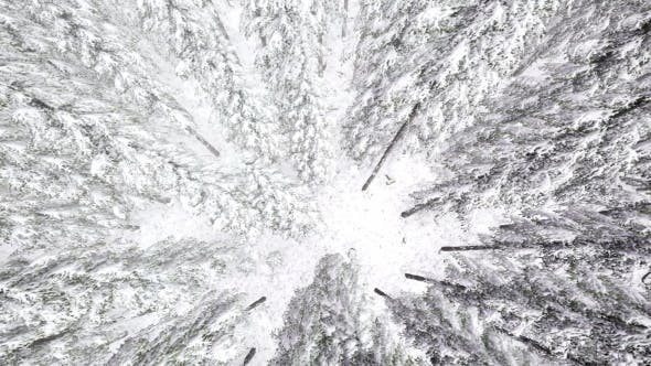Thumbnail for Flight Above Winter Forest