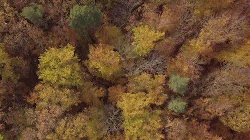Flight Over Autumn Forest. Untouched LOG Format.
