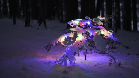 Thumbnail for The Decorated Christmas Tree in the Winter Forest
