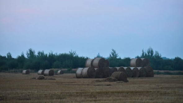 Cover Image for Tractor Stores Straw Bales