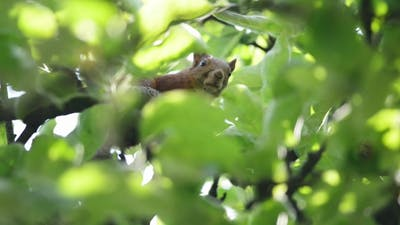 The Squirrel Peek Out