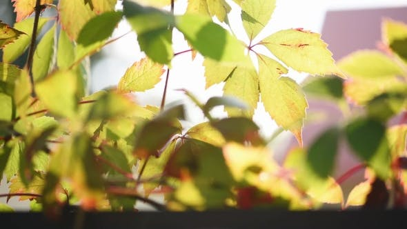 Cover Image for Orange Leaves on Wooden Terrace