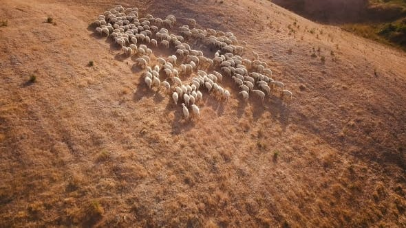 Thumbnail for Livestock on Hill