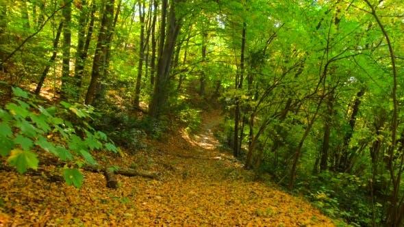 Herbst Straße im Wald