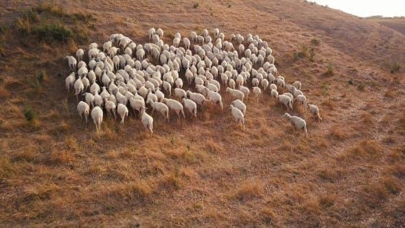 Thumbnail for Ziegen laufen auf Hügel