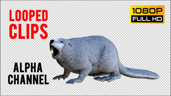 Thumbnail for Beaver 1 Realistic Pack 3