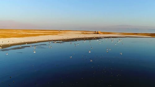 Migratory birds slowmotion.