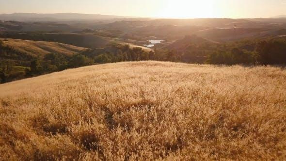Thumbnail for Sunlit Landscape