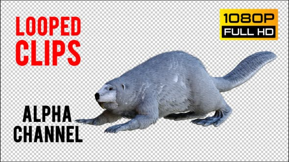 Thumbnail for Beaver 2 Realistic Pack 4
