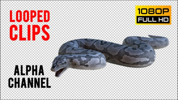 Thumbnail for Python 1 Realistic Pack 4