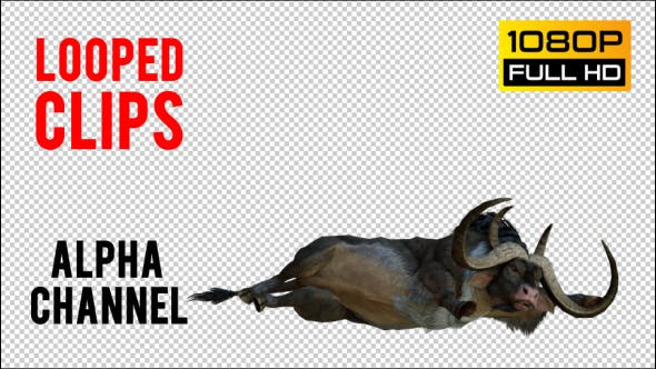 Thumbnail for Buffalo 3 Realistic Pack 3
