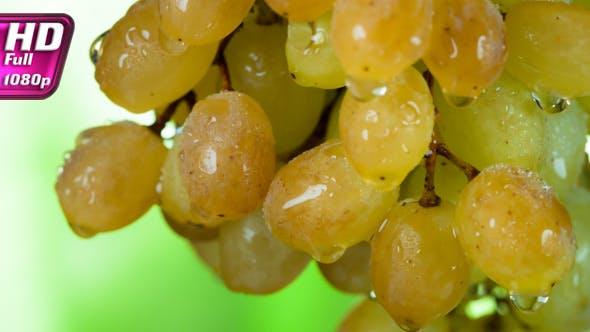 Thumbnail for Autumn Mature Grapes