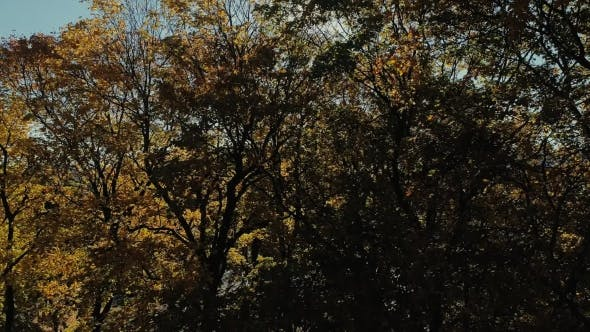 Riga Town City Autumn Yellow Tree Drone Flight