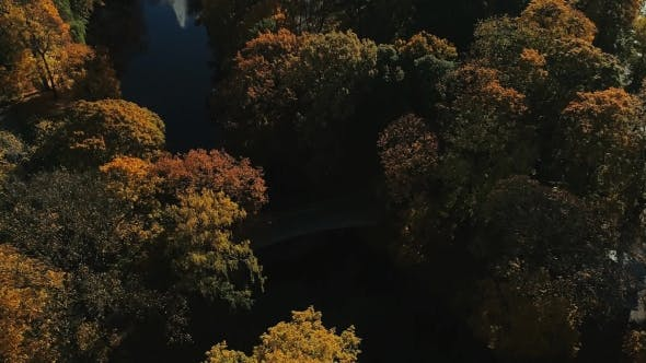 Thumbnail for Riga Town City Autumn Yellow Tree Drone Flight