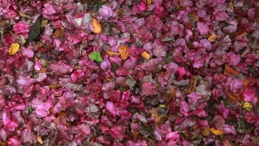 Thumbnail for Flower Bed Full HD
