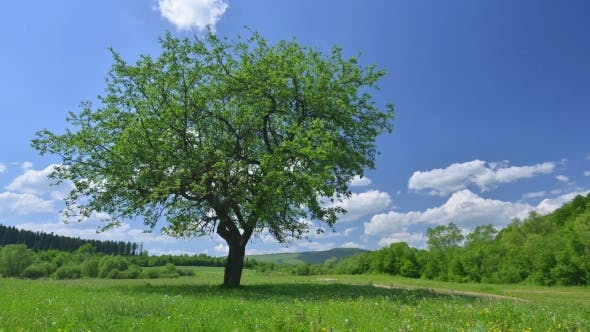Cover Image for Green Tree and Cloudy Sky