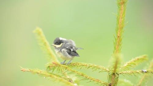 Small Bird on Fir Tree