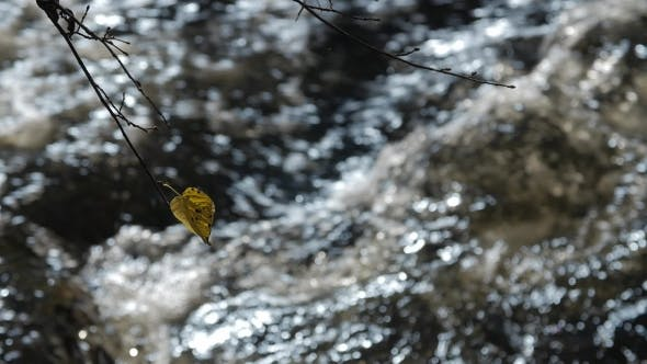 Thumbnail for Pure Freshwater Stream in the Deciduous Forest in Autumn