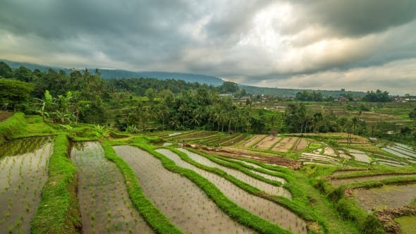 Cover Image for Beautiful Jatiluwih Rice Terraces in Bali, Indonesia