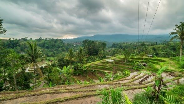 Thumbnail for Jatiluwih Rice Terraces in Bali, Indonesia