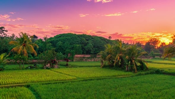 Thumbnail for Beautiful Sunrise Over the Jatiluwih Rice Terraces in Bali, Indonesia