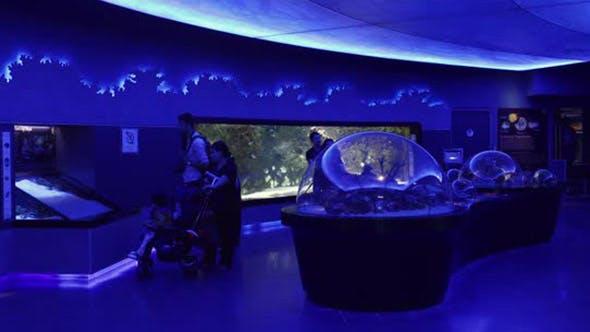 Thumbnail for People Watching Fish At The Aquarium