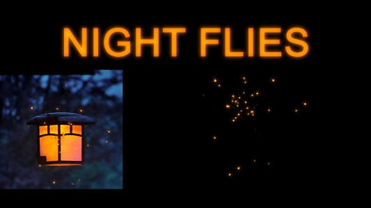 Thumbnail for Night Flies