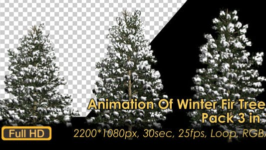 Thumbnail for Winter Fir Trees