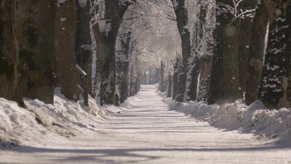 Thumbnail for Park Alley in the Snow