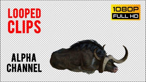 Cover Image for Buffalo 7 Realistic