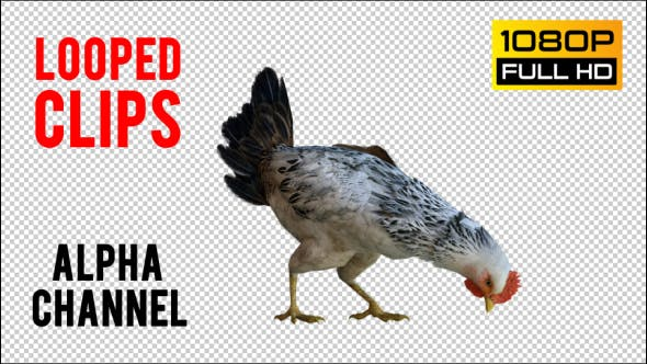 Thumbnail for Chicken 2 Realistic
